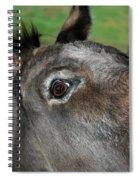 Donkey Stink Eye Spiral Notebook