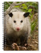 Don't Mess With Me Opossum Spiral Notebook