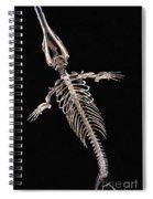 Dorudon Skeleton Spiral Notebook