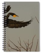 Double Crested Cormorant Coming Spiral Notebook