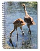 Sandhills Double Dipping Spiral Notebook