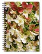 Double Hydrangeas  Spiral Notebook