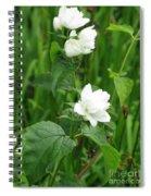 Double Jasmine In Bloom Spiral Notebook