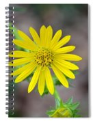 Double Lemon Zested Spiral Notebook