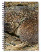 Down Right Dirty Mole Spiral Notebook