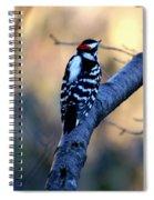 Downy Woodpecker Spiral Notebook