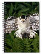 Downy Woodpecker In Flight Spiral Notebook