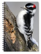 Downy Woodpecker Perched In A Tree Spiral Notebook