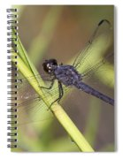 Dragonfly - Little Boy Blue Spiral Notebook