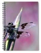 Dragonfly Bokeh Spiral Notebook