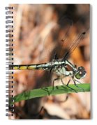 Dragonfly Closeup Spiral Notebook