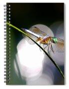 Dragonfly Dance Spiral Notebook