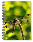 Dragonfly In Green Spiral Notebook