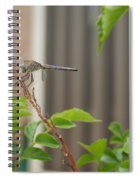 Dragonfly In Nature Spiral Notebook