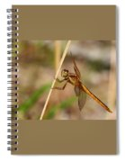 Dragonfly Looking At You Spiral Notebook