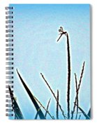 Dragonfly Magic Spiral Notebook