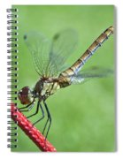 Dragonfly On A String Spiral Notebook