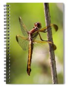 Dragonfly Photo - Yellow Dragon Spiral Notebook