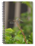Dragonfly Smile Spiral Notebook