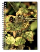 Dragonfly Wingspan Spiral Notebook