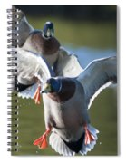 Dramatic Ducks Spiral Notebook