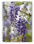 Draping Lavender Purple Wisteria Vines Spiral Notebook