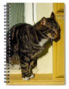 Dreaming Cat Spiral Notebook