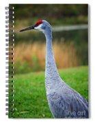 Dreaming Sandhill Crane Spiral Notebook