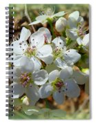 Dreams Of Pear Blossoms Spiral Notebook