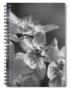 Dreamy Spring Blossoms In Black And White Spiral Notebook