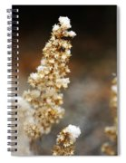 Dried Flower And Crystals Spiral Notebook