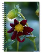 Dripping Garden 2 Spiral Notebook