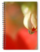 Dripping In Colors Spiral Notebook