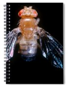 Drosophila With Dichaete Wings Spiral Notebook