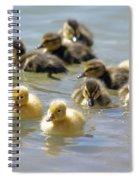 Ducklings 09 Spiral Notebook