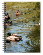 Ducks On The Water Spiral Notebook