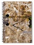 Ducks Reflect On The Days Events Spiral Notebook