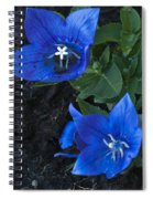 Dwarf Balloon Flower Platycodon Astra Blue  Spiral Notebook