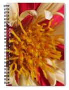 Dwarf Dahlia From The Collarette Dandy Mix Spiral Notebook