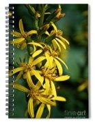Dwarf Golden Ray Spiral Notebook