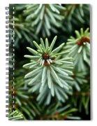 Dwarf Serbian Spruce Spiral Notebook
