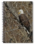 Eagle In Tree 3 Spiral Notebook