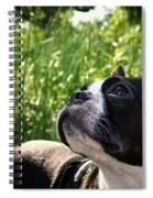 Eagle Scouting Spiral Notebook