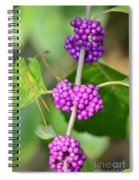 Early Amethyst Spiral Notebook
