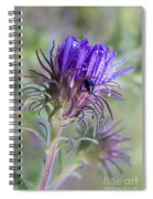 Early Knapweed Spiral Notebook