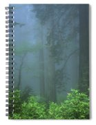 Early Morning In The Forest, Humboldt Spiral Notebook