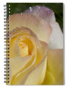 Early Morning Peace Rose Spiral Notebook
