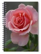 Early Morning Rose Spiral Notebook