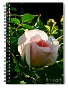 Early Rose Spiral Notebook