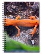 Easterm Newt Nnotophthalmus Viridescens 10 Spiral Notebook